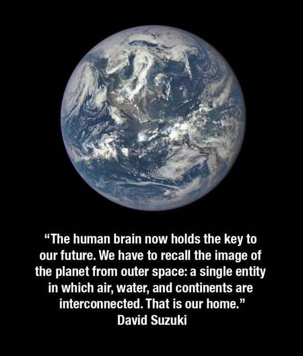 suzuki quote planet